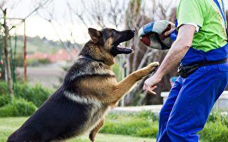 澳洲警犬因友善被开除 反换到好工作