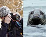 攝影師以為會遭吞吃 海豹媽媽卻餵食他4日