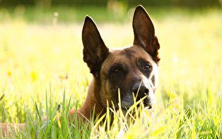 愛犬被誤判刑 主人用DNA翻案成功