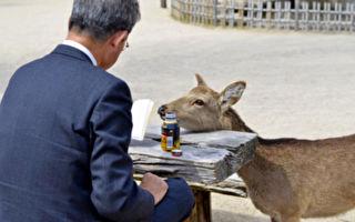 西班牙男子打猎几十年 因收养小鹿而戒杀