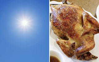 泰国男子用阳光烤鸡 只要12分钟就熟