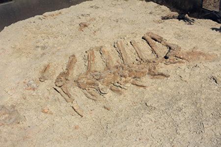 恐龙公园内埋藏着众多的恐龙化石。(Sunny/大纪元)