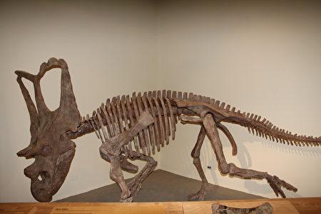被发掘出的恐龙种类多达40种。(Sunny/大纪元)