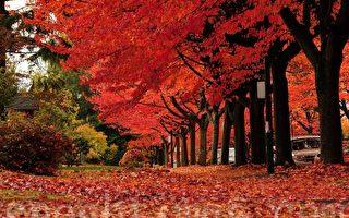 詩歌:加拿大秋色