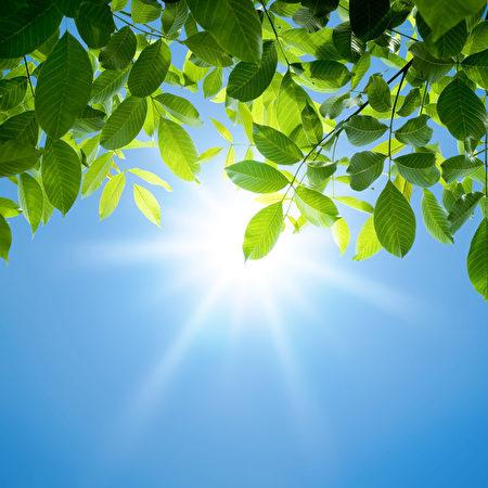 leaves, green, sun, tree, sky, background, sunlight, bright, summer, forest, light, abstraction, garden, branch, closeup, magic,