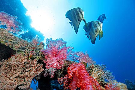 组图:南沙太平岛海底多样生态首度曝光