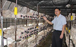 菇蕈養殖創新 FSC驗證香菇全球首創