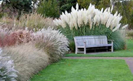 耐旱的觀賞性草類,很具粗獷的美感。(灣區建築師Susan Chen 提供)