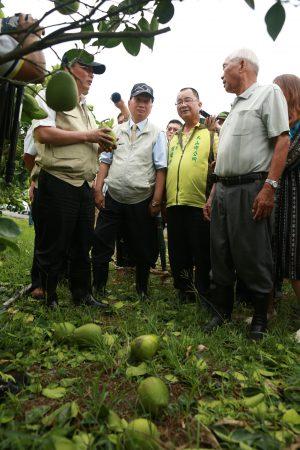 农委会主委林聪贤视察文旦柚农场损害情况。(曾汉东/大纪元)