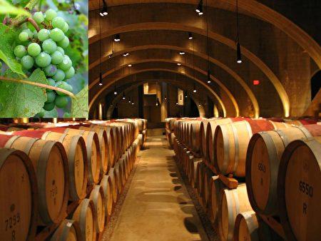 奥卡纳根湖区是加拿大最主要的葡萄酒产地之一。(Sunny/大纪元)