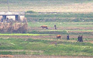 联合国:朝鲜处在大饥荒边缘