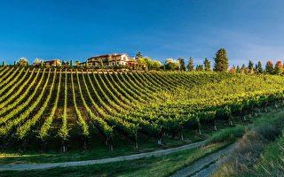 【阮公子】BC 新秀酒園 Mirabel Vineyards