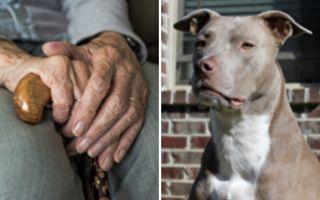 4犬冲入97岁老妇院中 紧急关头 英雄现身