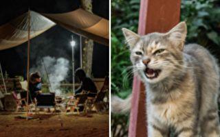 父子露營餵飢餓母貓 沒想到牠帶獨特禮物深夜來訪