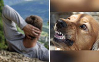 狗狗突咬主人手臂 几分钟后主人感谢它救命