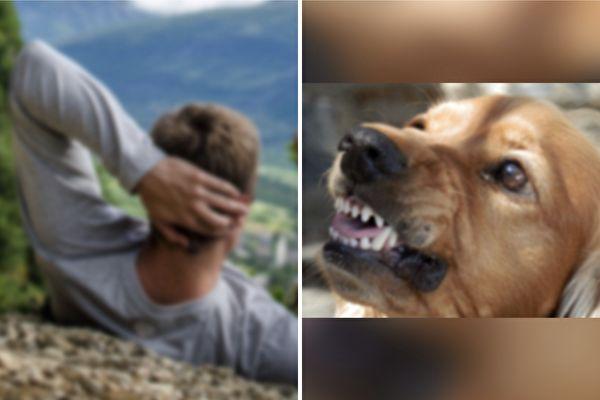 狗狗突咬主人手臂 幾分鐘後主人感謝牠救命
