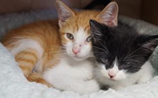 動物收容所貓隻超量  出台一美元求領養