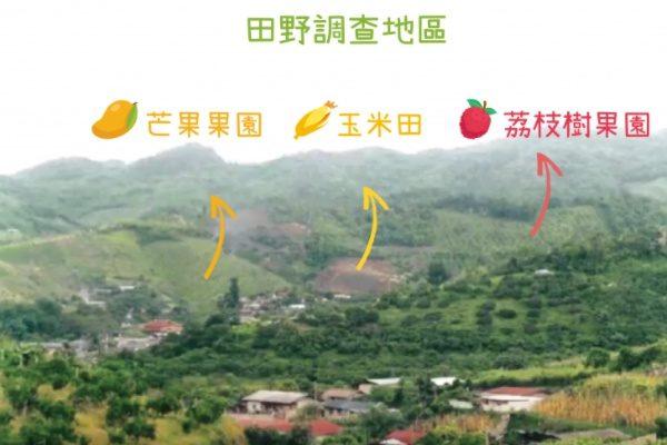 黃樹民與雲南大學、清邁大學團隊,選擇芒果、玉米、荔枝樹農地,檢測當地農作對水土成分的影響。(圖片來源/黃樹民提供 圖說重製/張語辰)