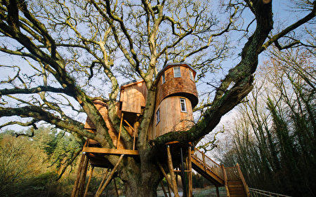 """树上""""城堡""""Treetops Treehouse,(canopyandstars.co.uk)"""