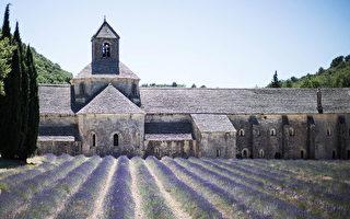 游记:薰衣草花开 法国普罗旺斯遍野飘香