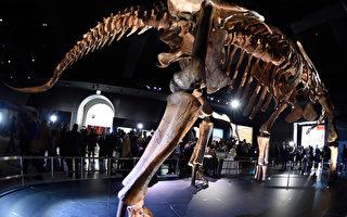 地表最大恐龙 巴塔哥泰坦巨龙正式命名
