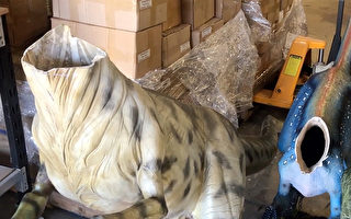 神祕客爬澳博物館 3迅猛龍模型遭斬首