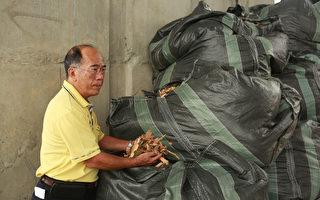 礁溪清洁队处理大树枝 售木屑0.5元/㎏