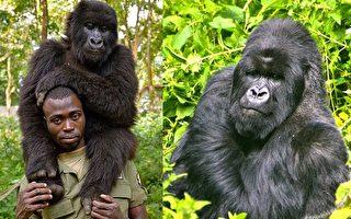 飼養員傷心獨坐輪胎 大猩猩上前擁抱送安慰