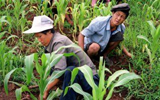 干旱加制裁 朝鲜民众对金正恩感到幻灭
