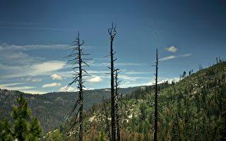 研究:亚洲沙尘滋养加州优胜美地森林