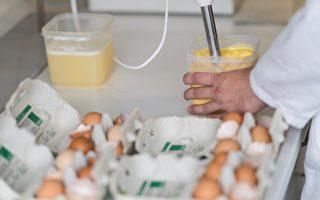 德國「毒雞蛋」風波 警報部分解除