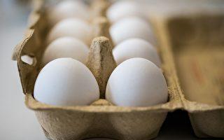 毒雞蛋蔓延歐洲 法國也中招