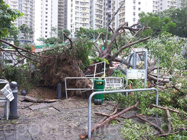 联合医院外有一棵约10米高大树被强风吹倒,进出医院的车路一度全线需要封闭。(读者提供)