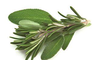 给你强大防御力的食物:芳香药草