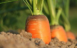 老太除草丟戒指13年後發現長在胡蘿蔔身上