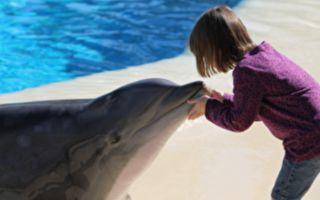 女孩看海豚表演 惊喜迎神秘嘉宾 全场轰动