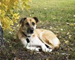 她救下沒人要的內向狗 不想牠保護了四鄰的性命