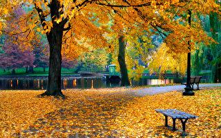 浮生行吟:季节的容颜