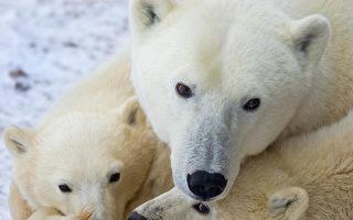 加拿大野生動物數量銳減逾八成