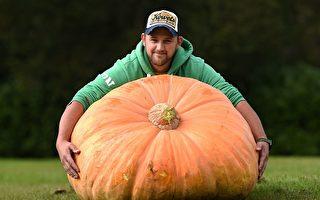310.7公斤的巨型南瓜!Richard Mann在哈羅蓋特秋季花展上展出了這個值得驕傲的大南瓜!(OLI SCARFF/AFP/Getty Images)