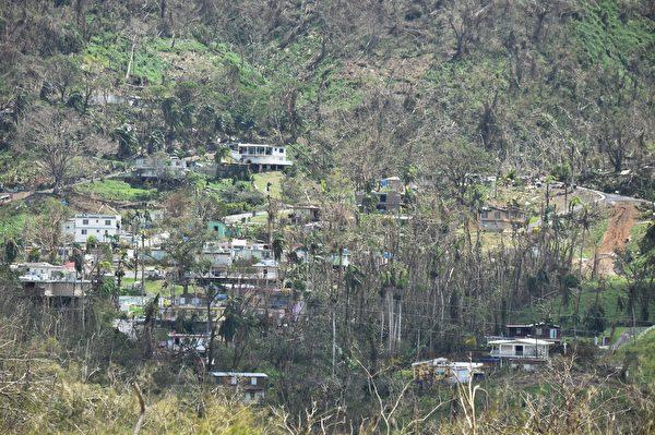 波多黎各森林、农作物亦遭摧毁,需要长期间复育。(HECTOR RETAMAL/AFP/Getty Images)