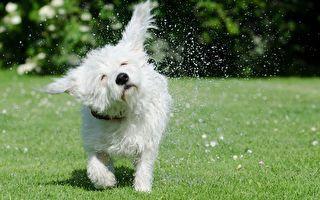 爆笑!为什么狗狗不喜欢洗澡?