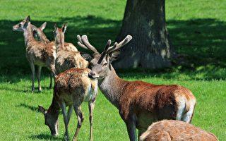 墨爾本一殯儀館遭野鹿衝擊 損失10多萬澳元