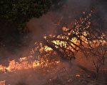 天公終於出手 馴服北加州大火在望