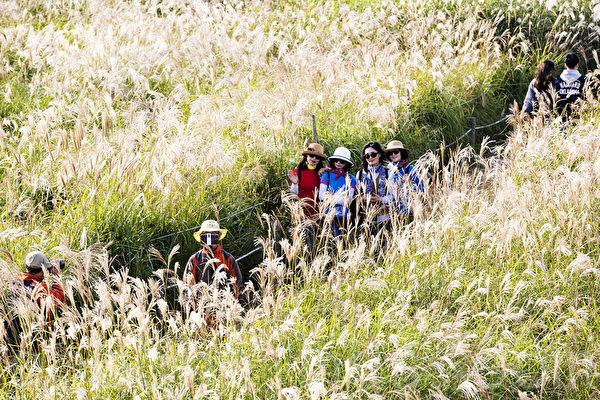 组图:首尔秋季必赏 天空公园紫芒花美景