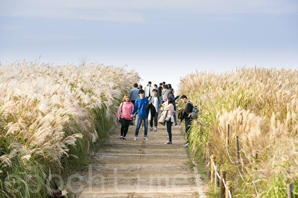 一年一度的韩国首尔天空公园紫芒节又到来了,今年的紫芒节是期间是11月13日至19日,一到这个季节天空公园变成一片银色的海洋,是秋季散步消闲的好去处。(全景林/大纪元)