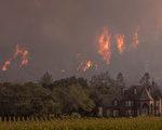 加州大火燒掉34大麻農場  聯邦嚴禁業者募款