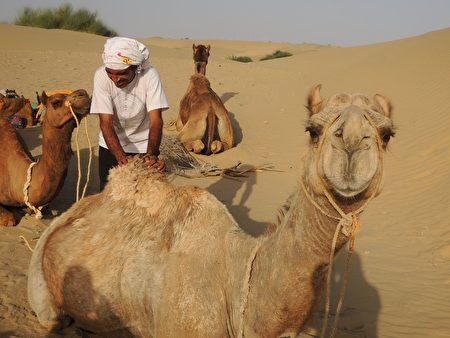 斋沙默尔(Jaisalmer)的骆驼之旅绝对让人想要再次体验。(郑芝薇提供)