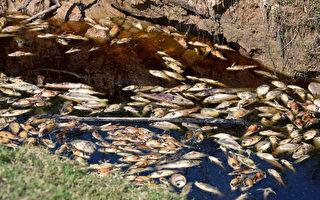 环境污染夺人命 研究:1年900万人死
