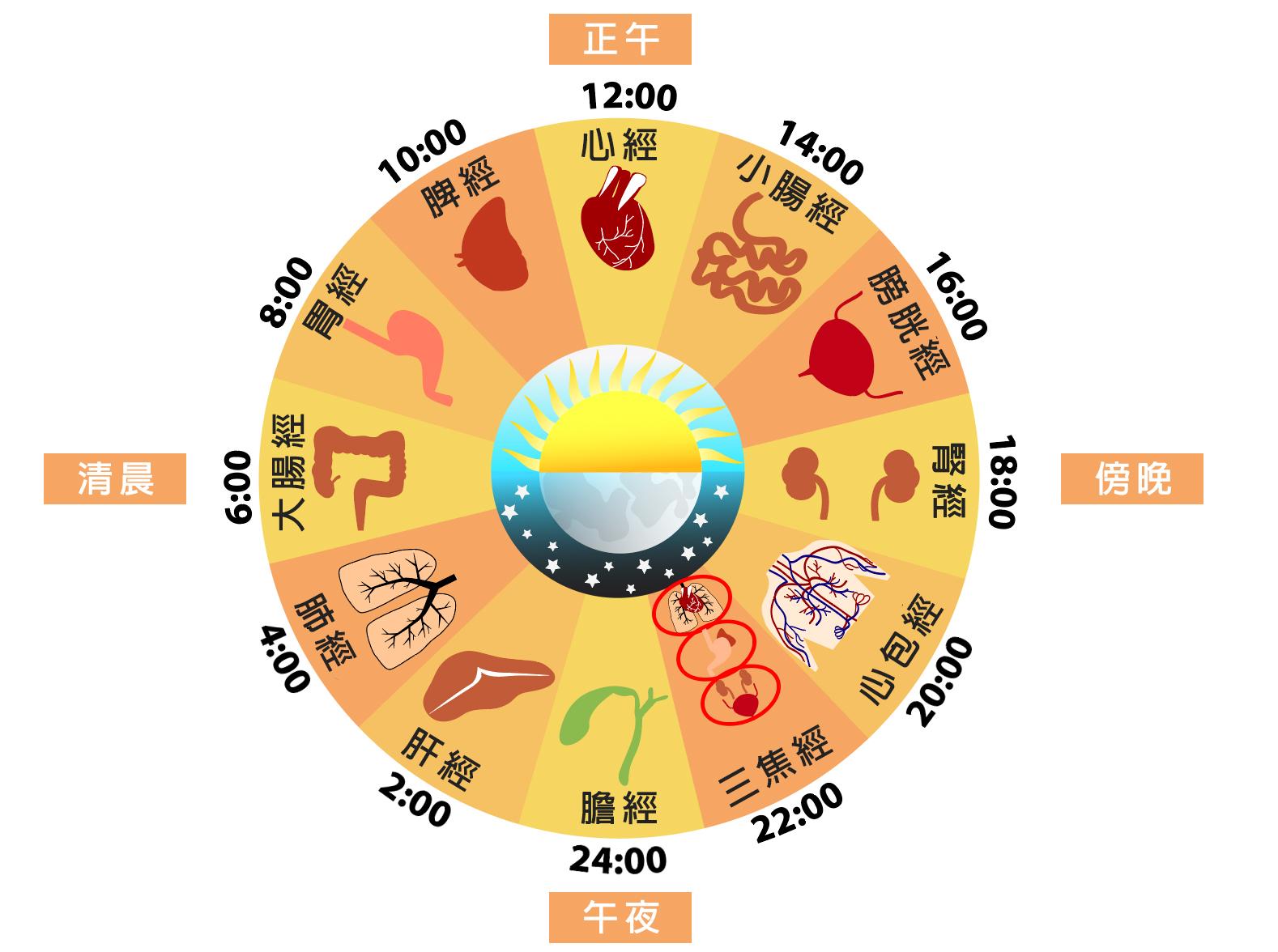 中醫「子午流注」理論認為,一天不同時辰對應不同的臟腑。(Shutterstock/大紀元製圖)